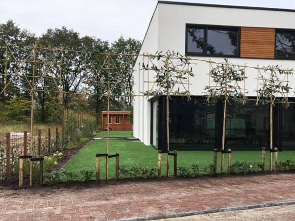 Leibomen zorgen voor een schaduwplek in de moderne tuin en verminderen inkijk