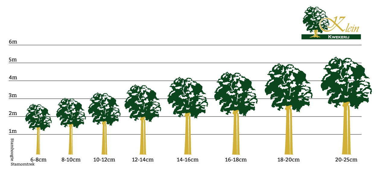 Bomen per stamomtrek kopen in de planten shop