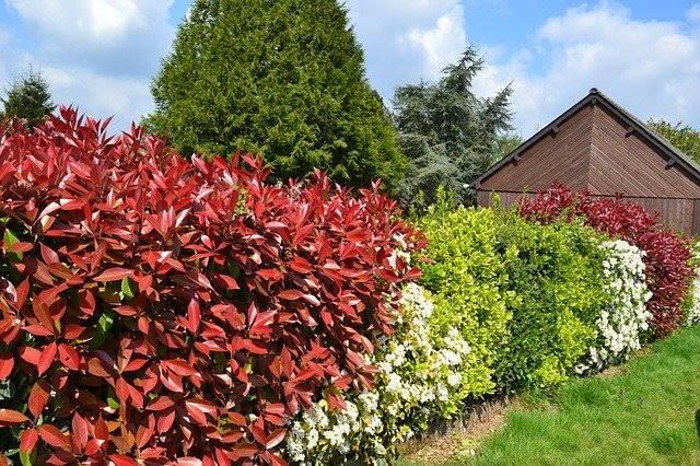 Met de korting voor hoveniers kunt u mooie haagplanten voordelig inkopen.