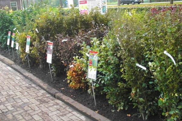 Bij Kwekerij Klein kopen hoveniers en grootgebruikers van tuinplanten beplanting met hoge korting.