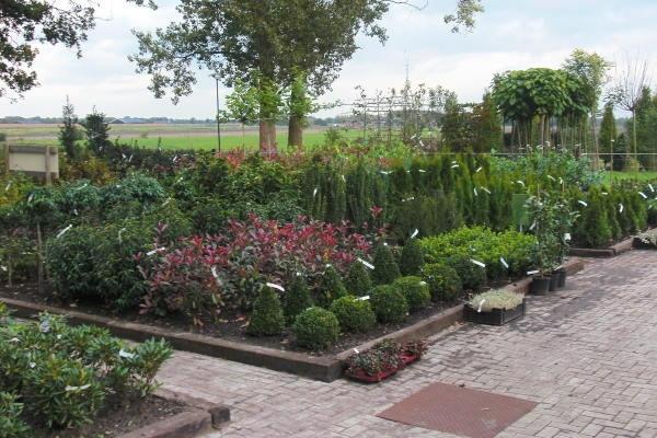 Kwekerij Klein biedt hoveniers en grootgebruikers van tuinplanten een mooie korting.