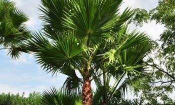 Breng de zomer in de tuin met de palmbomen uit onze planten webshop