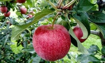 Door fruitbomen te bestellen in onze webshop, profiteert u elk jaar van heerlijk vers fruit